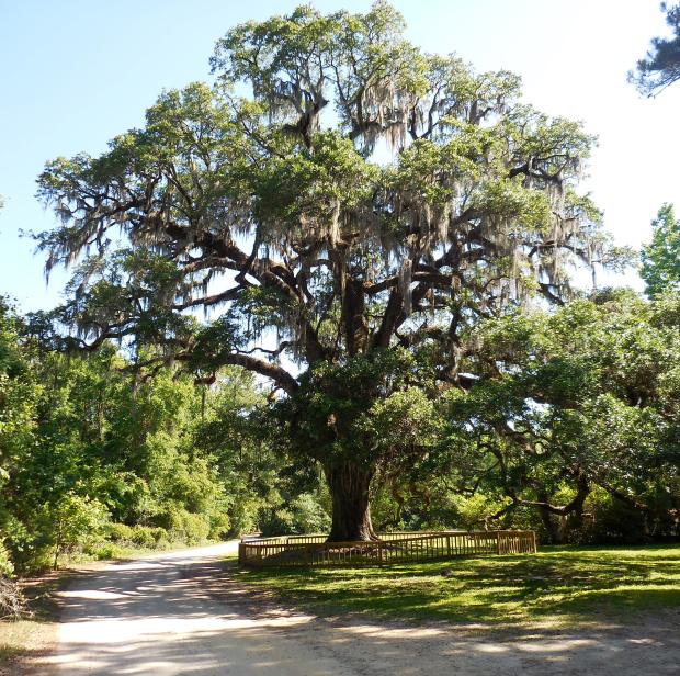 the-oak1